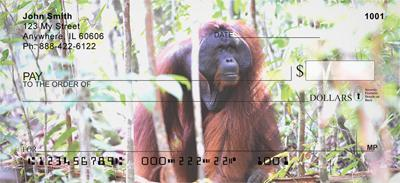 Orangutan In The Wild