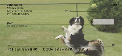 Playful Australian Shepherds Checks