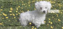 Bichon Frises Outdoors