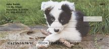 Border Collie Puppies