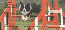 Agile Border Collies