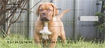 French Mastiff Pups