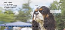 Tricolor Cavalier King Charles Spaniels