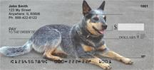 Grey Australian Cattle Dogs