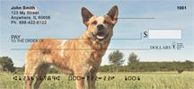 Tan Australian Cattle Dogs