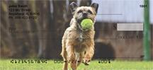 Playful Border Terriers