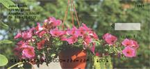 Potted Petunias