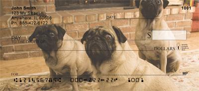Perfect Pugs