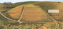 Sprawling Vineyards