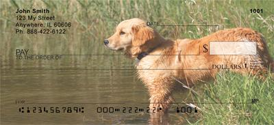 Golden Retrievers By The Water