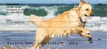 Golden Retrievers On The Beach