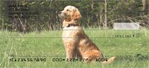 Watchful Golden Retrievers