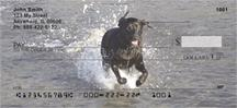Black Labs In The Water