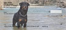Rottweilers In The Water