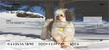 Snowbound Shih Tzus