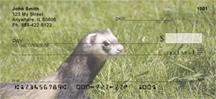 Ferrets In The Grass