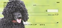 Black Poodles
