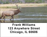 Elk In The River Address Labels