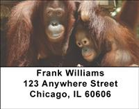 Orangutan Mother And Child Address Labels