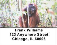 Orangutan In The Wild Address Labels