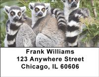 Ring-tailed Lemur Family Address Labels