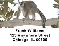 Perching Lemurs Address Labels