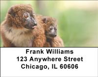 Red-bellied Lemurs Address Labels
