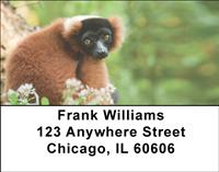 Red Ruffed Lemur Address Labels
