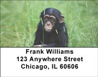 Baby Chimp Address Labels