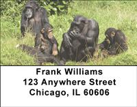 Chimpanzee Family Address Labels