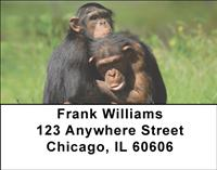 Chimp Couple Address Labels