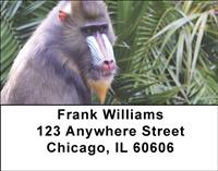 Mandrill Baboon Address Labels