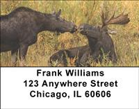 Moose Couples Address Labels