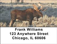 Bull Moose Address Labels