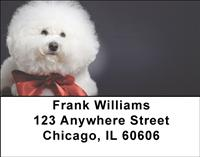 Bichon Frise Portrait Address Labels