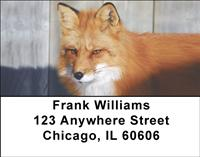 Wild Foxes Address Labels