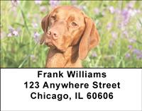 Vizslas Outdoors Address Labels