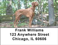Vizslas On The Hunt Address Labels