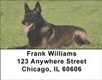 Belgian Malinois Address Labels