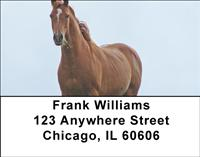 Horses Address Labels