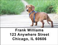 Diminutive Dachshunds Address Labels
