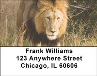Lions Address Labels