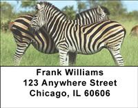 Zebras Address Labels