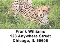 Cheetahs Address Labels