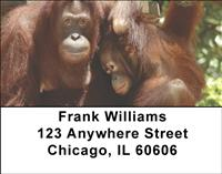 Primates Address Labels