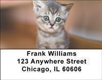 Adopt a Cat Address Labels