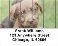 Adopt a Dog Address Labels
