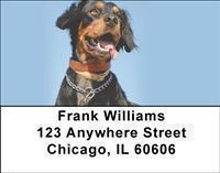 Brittany Spaniels Address Labels