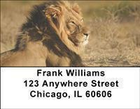 Safari Address Labels