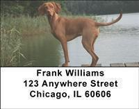 Vizslas Address Labels